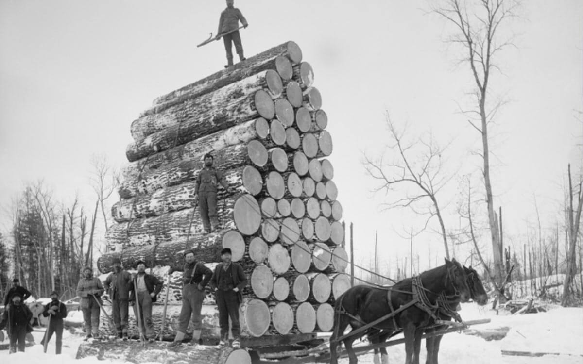 5 Reasons Why You Shouldn't Measure Timber Via Weight