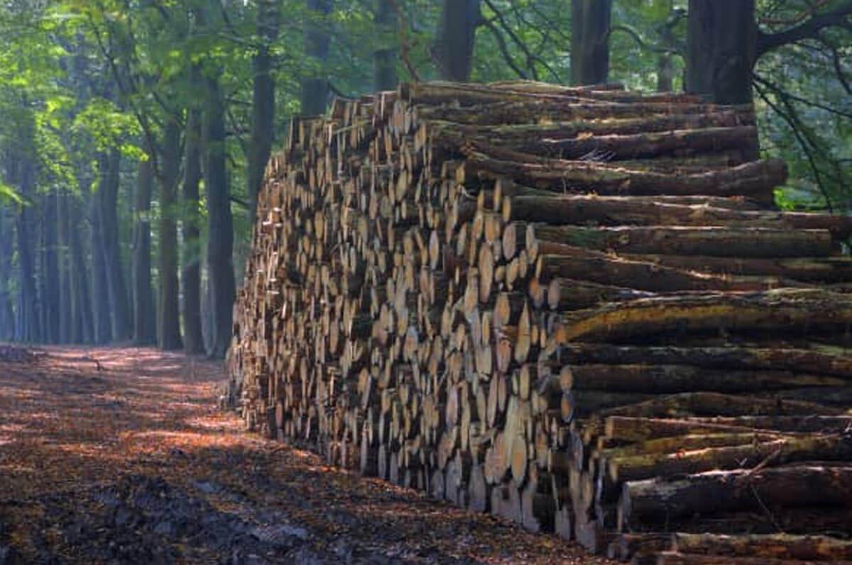 Comparación de diferentes fórmulas de escala de troncos de madera