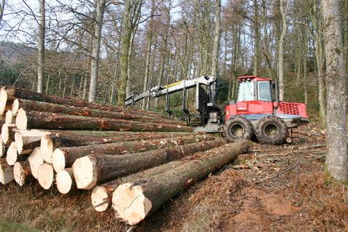 2019年の林業界における予測