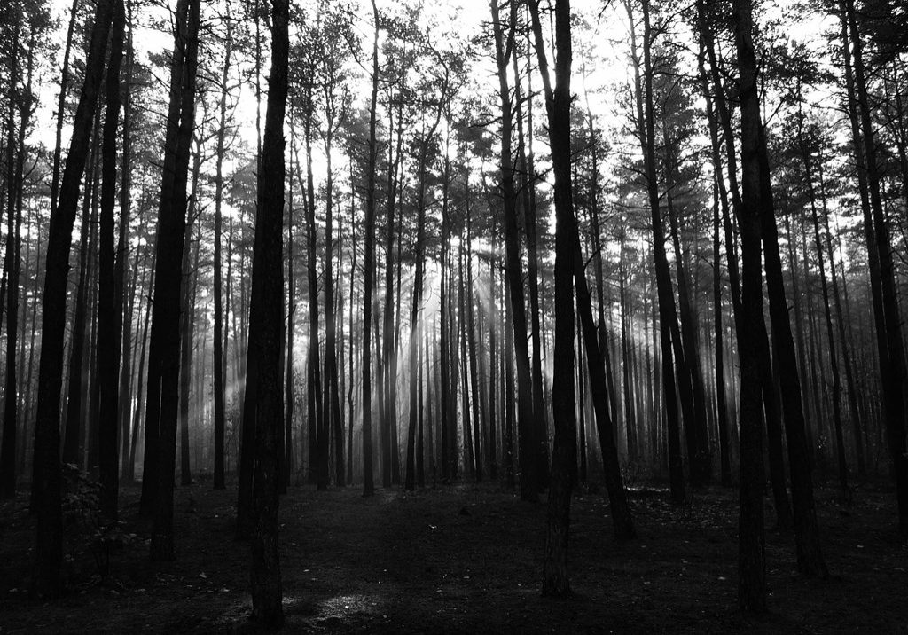 10401_dark-forest-backgrounds_2736x2141_h