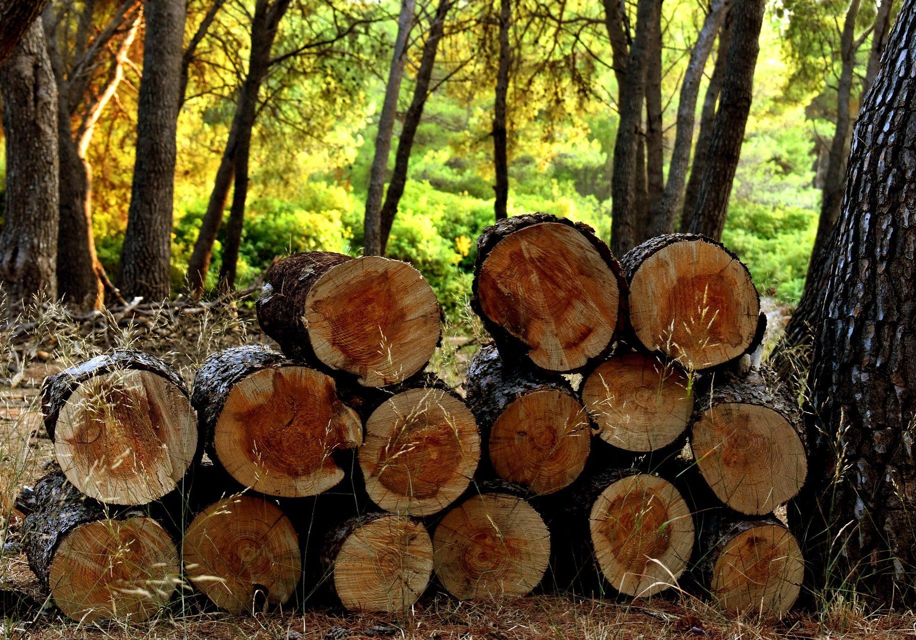 logs-3639211_1920