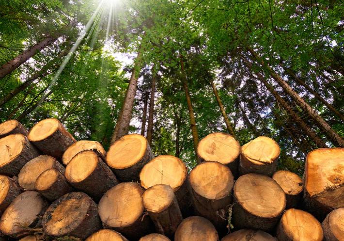 modernize forestry